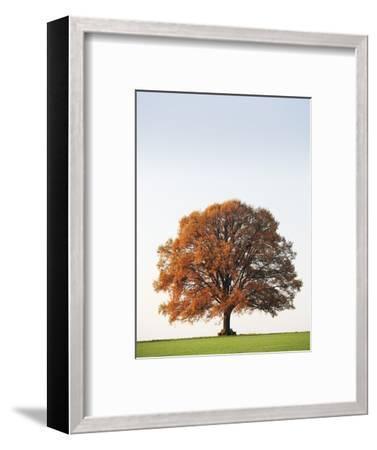 Oak Tree in Meadow-Frank Lukasseck-Framed Photographic Print