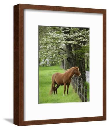 Horse Standing by Fence-William Manning-Framed Photographic Print