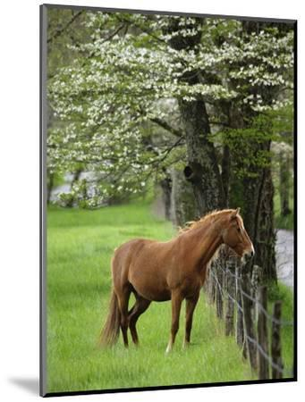Horse Standing by Fence-William Manning-Mounted Photographic Print