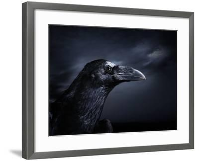 Profile of a Crow-Digital Zoo-Framed Photographic Print