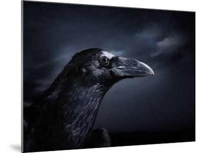 Profile of a Crow-Digital Zoo-Mounted Photographic Print