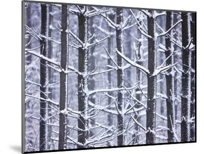 Snow-covered Trees in Forest-Jim Craigmyle-Mounted Photographic Print