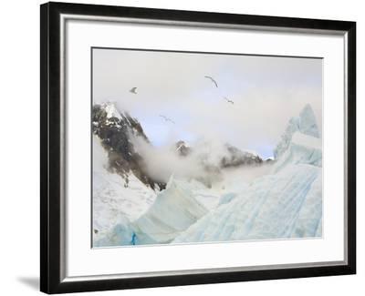 Gulls Flying Above Stranded Icebergs at Boothe Island-John Eastcott & Yva Momatiuk-Framed Photographic Print