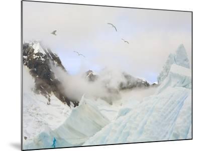 Gulls Flying Above Stranded Icebergs at Boothe Island-John Eastcott & Yva Momatiuk-Mounted Photographic Print