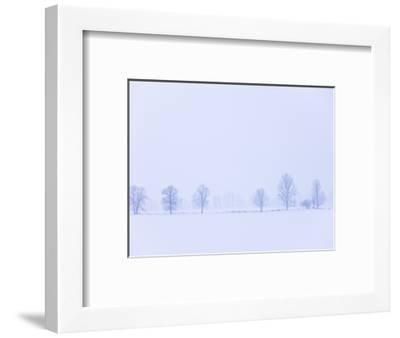 Trees Along Fence in Winter-Jim Craigmyle-Framed Photographic Print