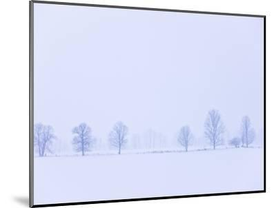 Trees Along Fence in Winter-Jim Craigmyle-Mounted Photographic Print