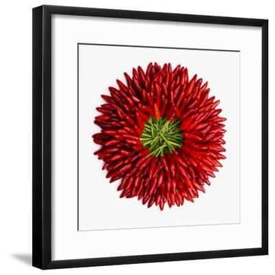 Chili Peppers--Framed Photographic Print