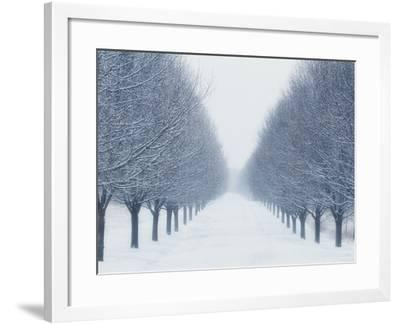 Tree-lined Road in Winter-Robert Llewellyn-Framed Photographic Print