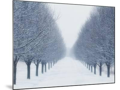 Tree-lined Road in Winter-Robert Llewellyn-Mounted Photographic Print