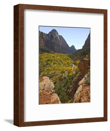 Fremont Cottonwoods at Zion National Park-James Randklev-Framed Photographic Print