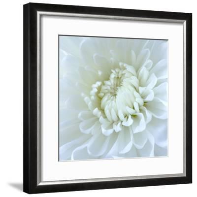 Close-up of White Flower-Clive Nichols-Framed Photographic Print