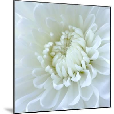 Close-up of White Flower-Clive Nichols-Mounted Photographic Print