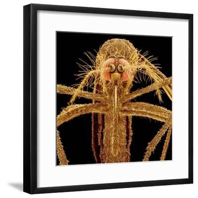 Female Asian Tiger Mosquito-Micro Discovery-Framed Photographic Print