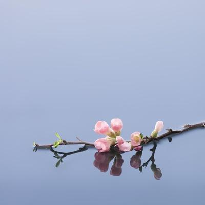 Cherry blossoms on water-John Smith-Framed Photographic Print