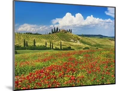 Farmhouse with Cypresses and Poppies-Frank Krahmer-Mounted Photographic Print