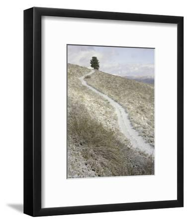 Snowy ranch road and lone tree in Inyo National Forest-John Eastcott & Yva Momatiuk-Framed Photographic Print