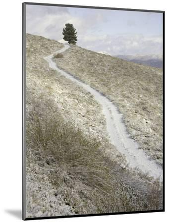 Snowy ranch road and lone tree in Inyo National Forest-John Eastcott & Yva Momatiuk-Mounted Photographic Print
