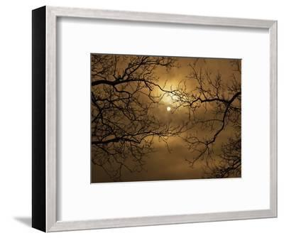 Branches Surrounding Harvest Moon-Robert Llewellyn-Framed Photographic Print