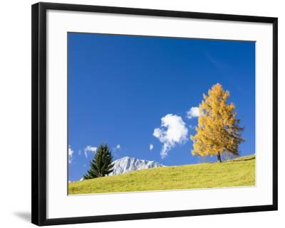 Tree in Alpine Meadow in Autumn-Frank Lukasseck-Framed Photographic Print