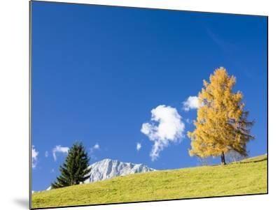 Tree in Alpine Meadow in Autumn-Frank Lukasseck-Mounted Photographic Print