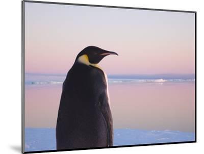 Emperor Penguin on Pack Ice-Keren Su-Mounted Photographic Print