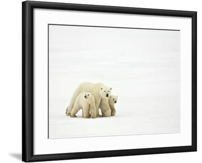 Mother and Cubs Walking-John Conrad-Framed Photographic Print