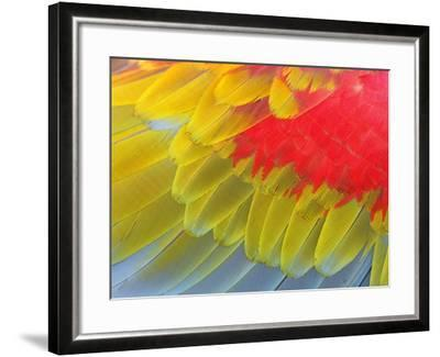 Feathers of a Scarlet Macaw-Arthur Morris-Framed Photographic Print