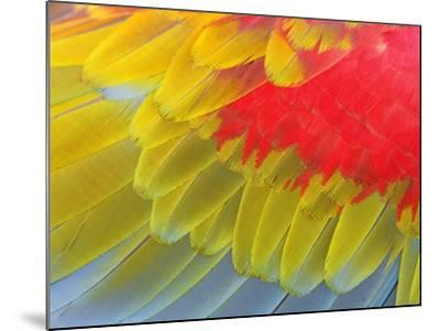 Feathers of a Scarlet Macaw-Arthur Morris-Mounted Photographic Print