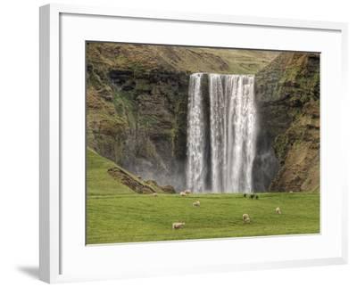 Skogarfoss with grazing sheep--Framed Photographic Print