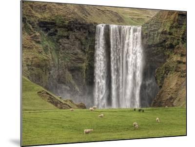 Skogarfoss with grazing sheep--Mounted Photographic Print