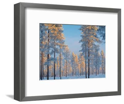 Snow-covered forest-Bruno Ehrs-Framed Photographic Print