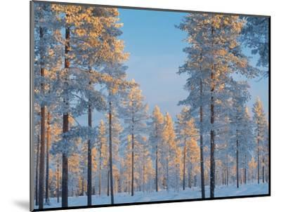 Snow-covered forest-Bruno Ehrs-Mounted Photographic Print