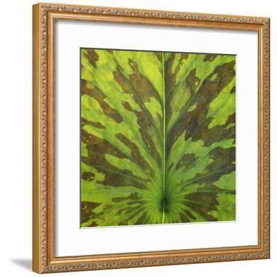 Closeup of Leaf-Micha Pawlitzki-Framed Photographic Print