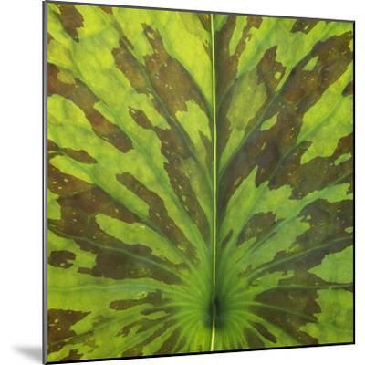 Closeup of Leaf-Micha Pawlitzki-Mounted Photographic Print