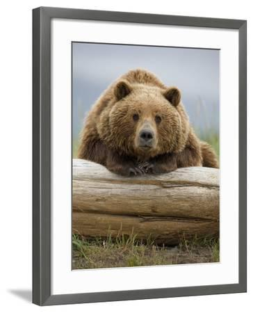 Grizzly Bear Leaning on Log at Hallo Bay-Paul Souders-Framed Photographic Print