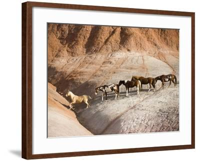 Herd of horses in foothills-Frank Lukasseck-Framed Photographic Print