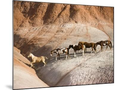 Herd of horses in foothills-Frank Lukasseck-Mounted Photographic Print