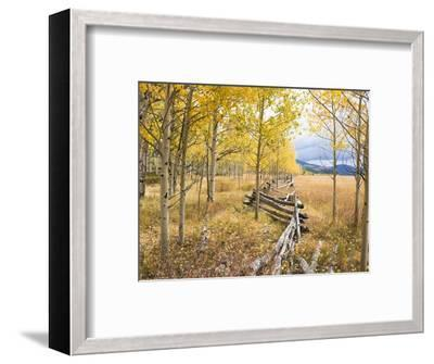 Wooden fence and Aspen forest in autumn-Frank Lukasseck-Framed Photographic Print