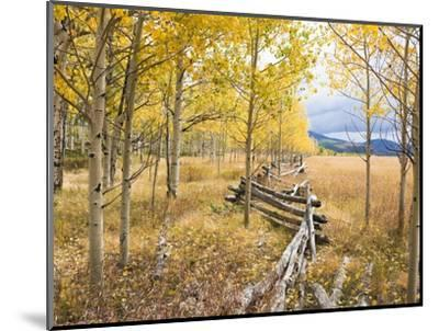 Wooden fence and Aspen forest in autumn-Frank Lukasseck-Mounted Photographic Print