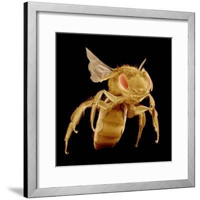 Bee-Micro Discovery-Framed Photographic Print