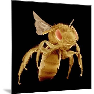 Bee-Micro Discovery-Mounted Photographic Print