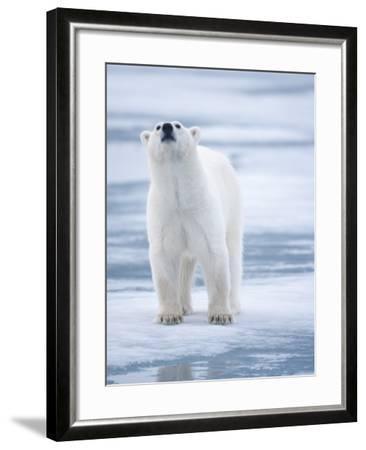 Polar Bear, Svalbard, Norway-Paul Souders-Framed Photographic Print
