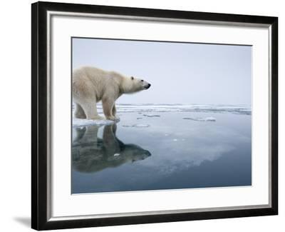 Polar Bear on Melting Ice, Svalbard, Norway-Paul Souders-Framed Photographic Print