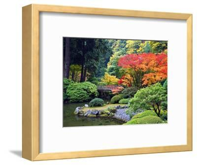 Fall Colors at Portland Japanese Gardens, Portland Oregon-Craig Tuttle-Framed Photographic Print