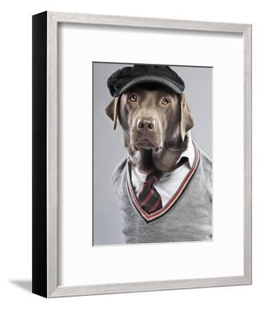 Dog in sweater and cap-Justin Paget-Framed Photographic Print