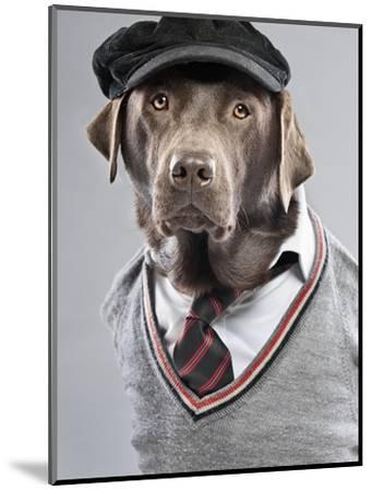 Dog in sweater and cap-Justin Paget-Mounted Photographic Print