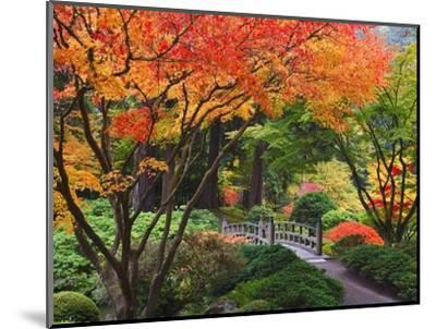 Fall colors at Portland Japanese Gardens, Portland Oregon-Craig Tuttle-Mounted Photographic Print