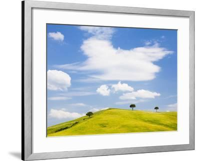 Pine trees on a ridge-Frank Lukasseck-Framed Photographic Print