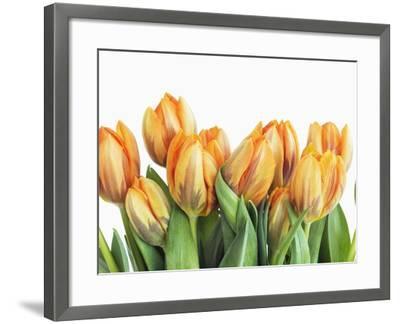 Tulips-Frank Krahmer-Framed Photographic Print