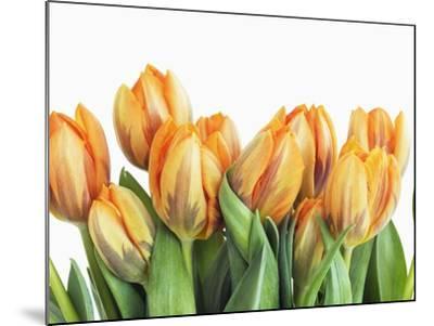 Tulips-Frank Krahmer-Mounted Photographic Print
